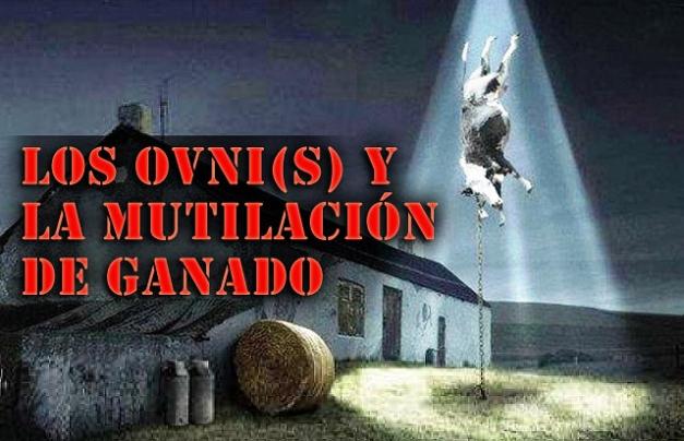 http://realidadovniargentina.files.wordpress.com/2013/06/64df0-ovnisymutilaciondeganado.jpg?w=627