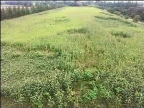 crop circle ovni